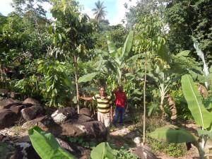 Productor Jose Nolasco en su parcela agroforestal