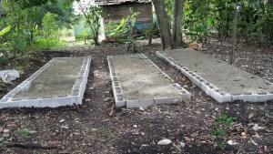 Germinadores con semillas de aguacate, nuevo vivero en Hondo Valle