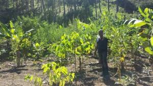 Parcela agroforestal en Juan Santiago propiedad del señor Ismenio D Oleo